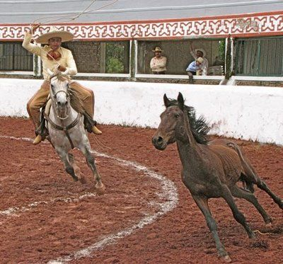 http://bit.ly/horseraces - Horse Racing