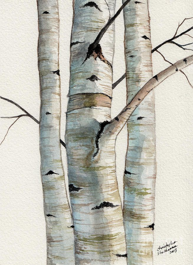 Three Birch Trees Tree Watercolor Painting Birch Tree Art