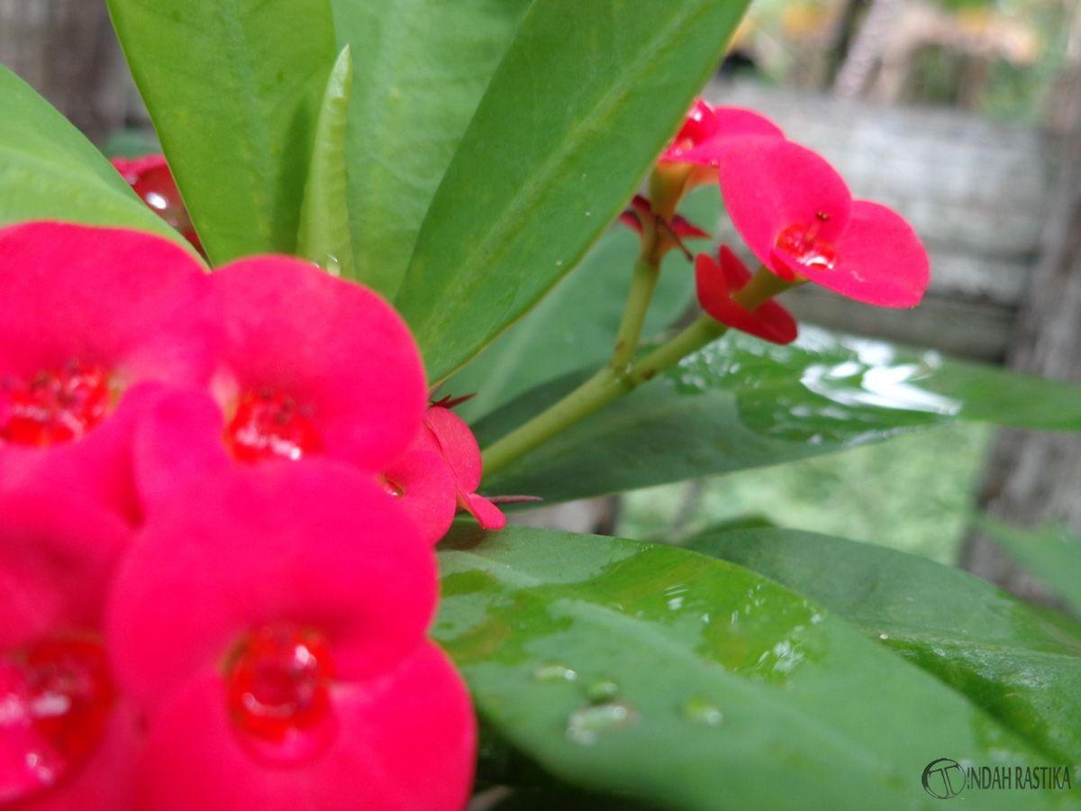 Too Shine Flower Red Again Bunga Warna