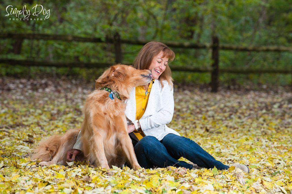 Fall golden retriever session columbus ohio dog