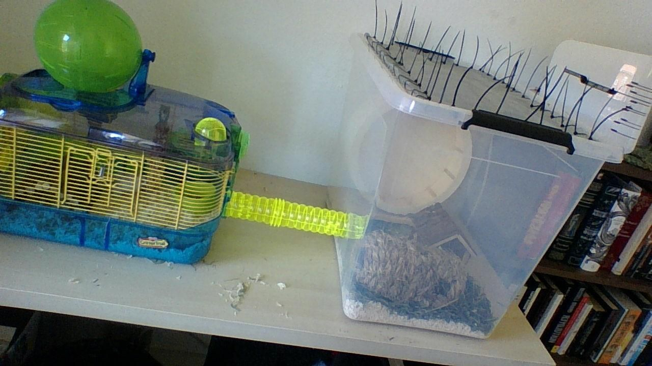 Wheel wasn't working properly in old cage (on the left) and it was a bit small. So I expanded it with a new wheel and more floor space. #aww #Cutehamsters #hamster #hamstersofpinterest #boopthesnoot #cuddle #fluffy #animals #aww #socute #derp #cute #bestfriend #itssofluffy #rodents