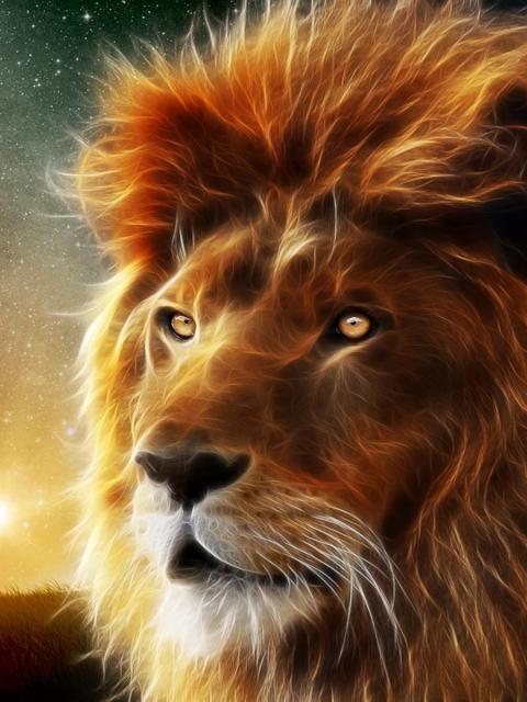 Lion 3d Animal Wallpaper Hd Wallpaper Tycoon 5063 Wallpaper Spirit Animal Lion Hd Wallpaper Lion Wallpaper