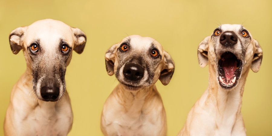Photograph by Elke Vogelsang on 500px
