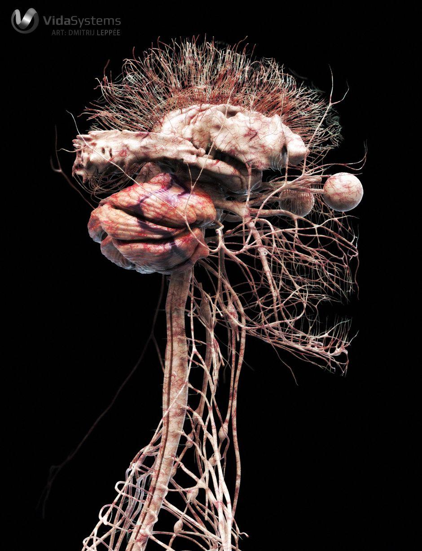 Central nervous system by Dmitrij Leppée | Medical Visualization ...