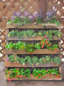 The Semi-Urban Gardener: Who says Saturdays are for relaxing?