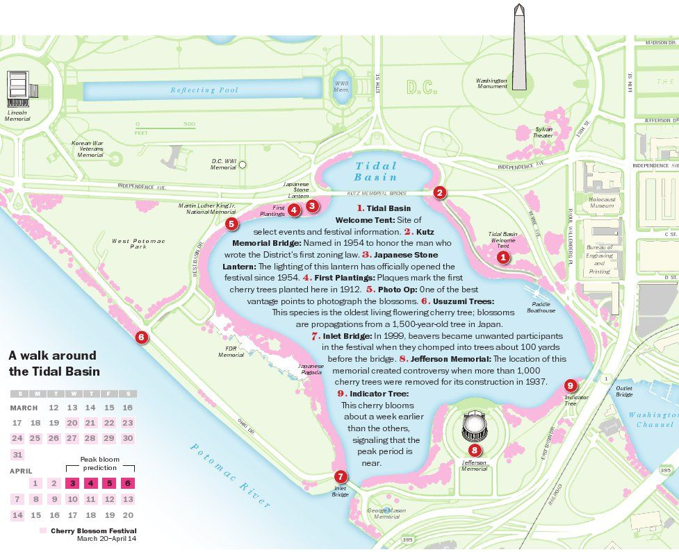 Download A Map Of The Best Cherry Blossom Locations Cherry Blossom Festival Washington Dc Travel Dc Travel