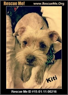 Rescue Me Id 15 01 11 00216kiti Female Yorkie Mix Age Puppy Compatibility Good With Most Dogs Personality Avera Dog Personality Yorkie Yorkie Mix