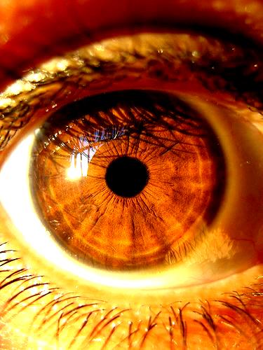 Brown Eye Macro Picture Brown Eyes Aesthetic Beautiful Brown Eyes Eye Photography