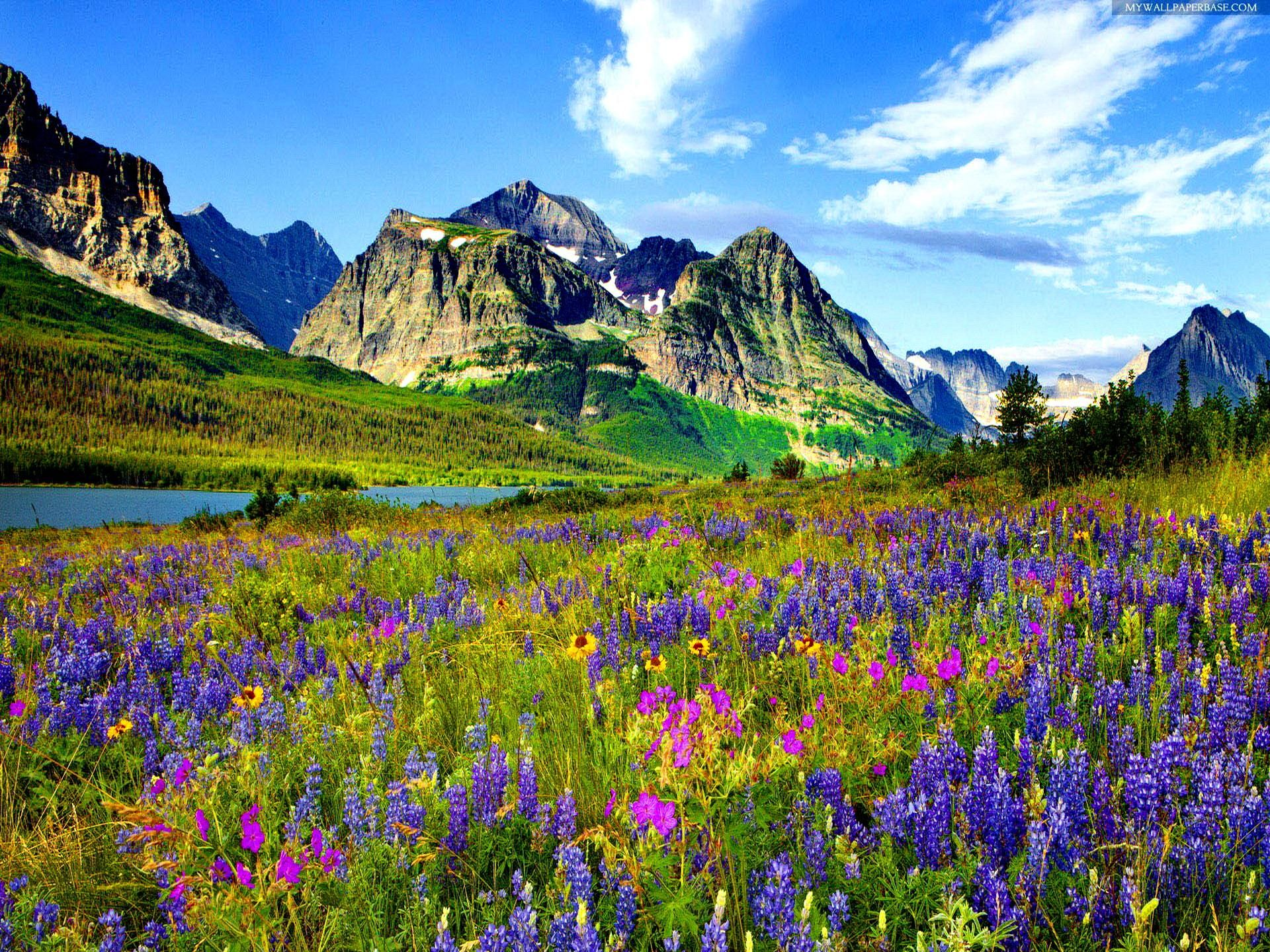 Mountain Rocky Wallpaper Colorado Flowers Mountain Flowers
