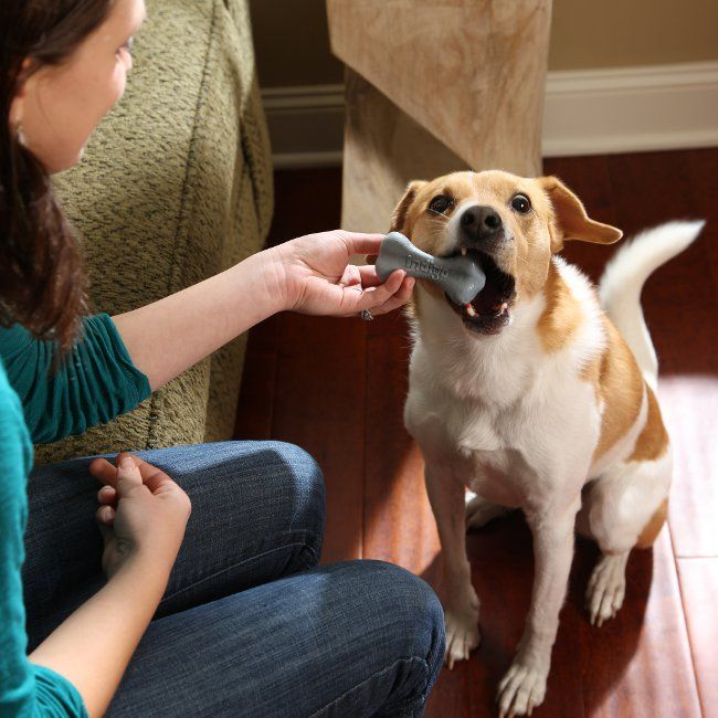 How to Fight Bad Pet Breath | PetSafe® Articles