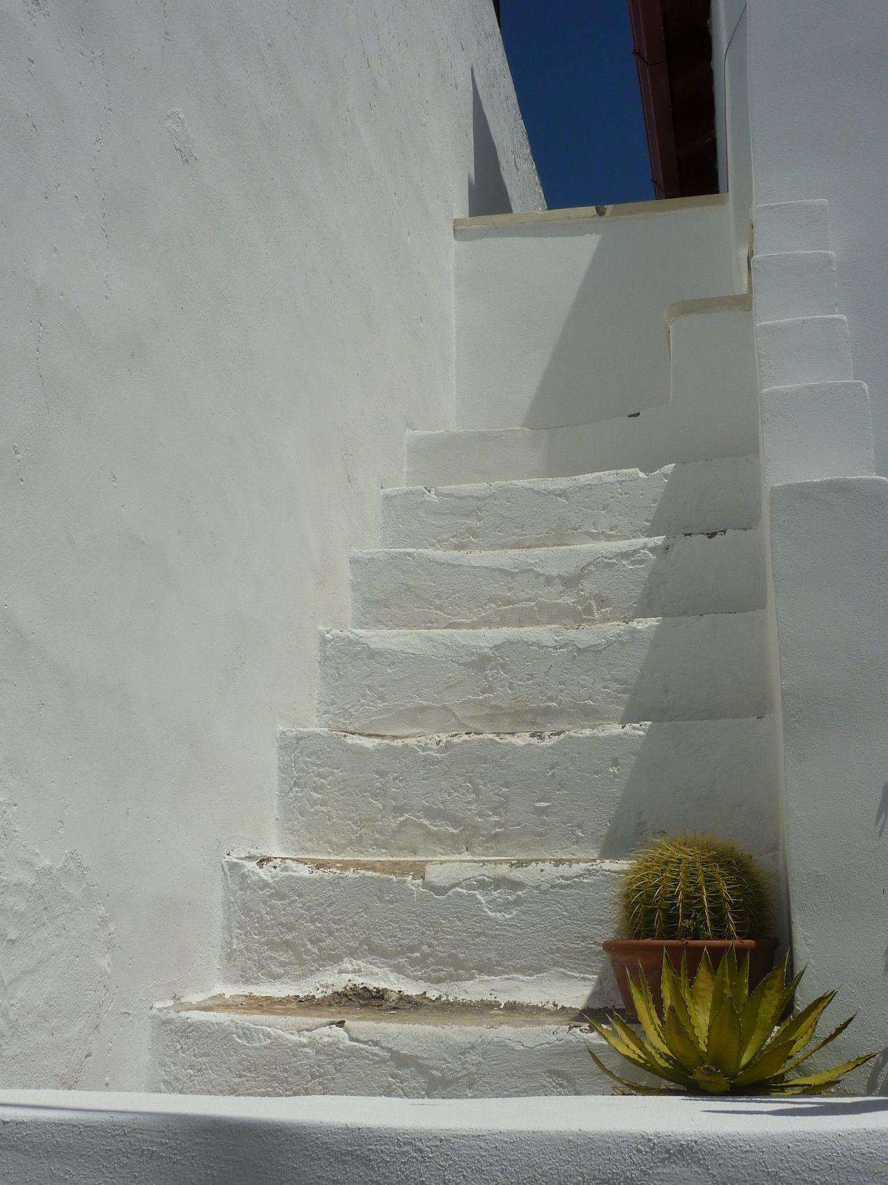 Cactus and stairs - Matino