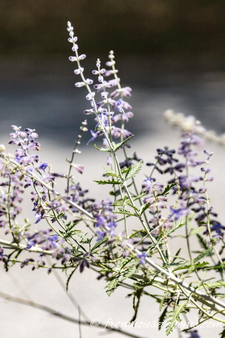 10 Of The Best Plants For Fall Flowers Pinterest Plants Flowers