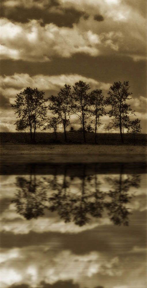 landscape photography fine art photography sepia brown 10x20 print trees woodland office decor home decor for him on Etsy, $54.17 AUD