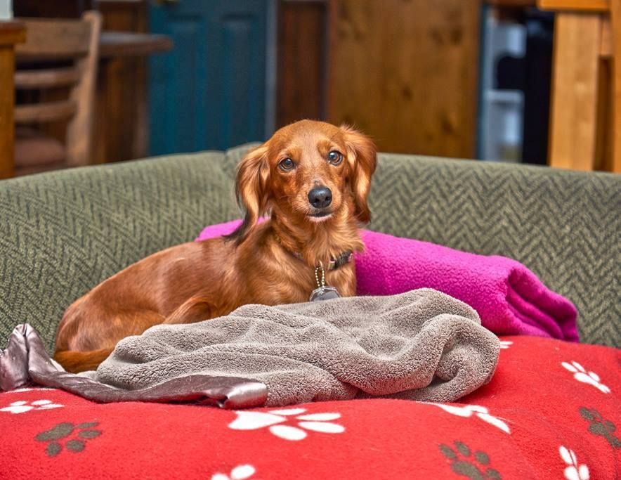 Hamilton Canadian Dachshund Rescue Ontario Will Be At The Big