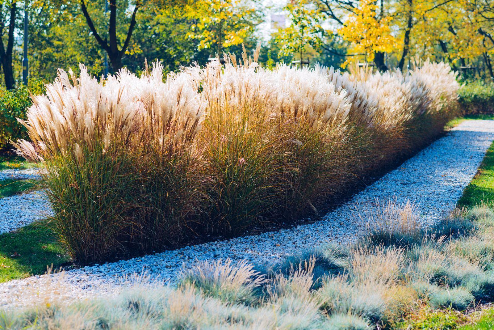 Pflanzen Als Sichtschutz Unsere Top 15 Fur Garten Balkon Mit