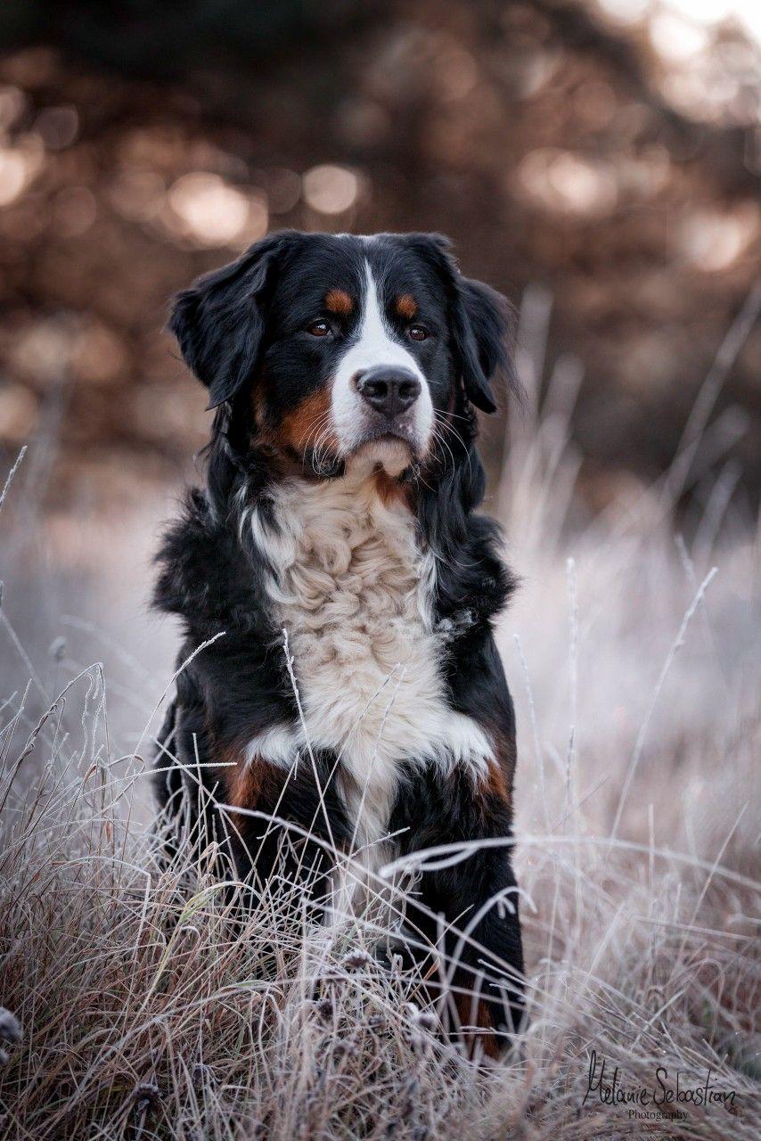 Pin Von Anna Lersch Auf Tiere In 2020 Tierfotografie Hundefotos Hunde Bilder