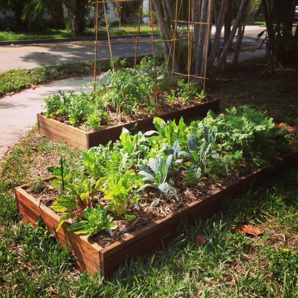 Small Raised Garden: Miami Ready-To-Grow Garden Raised Beds / Organic Kits