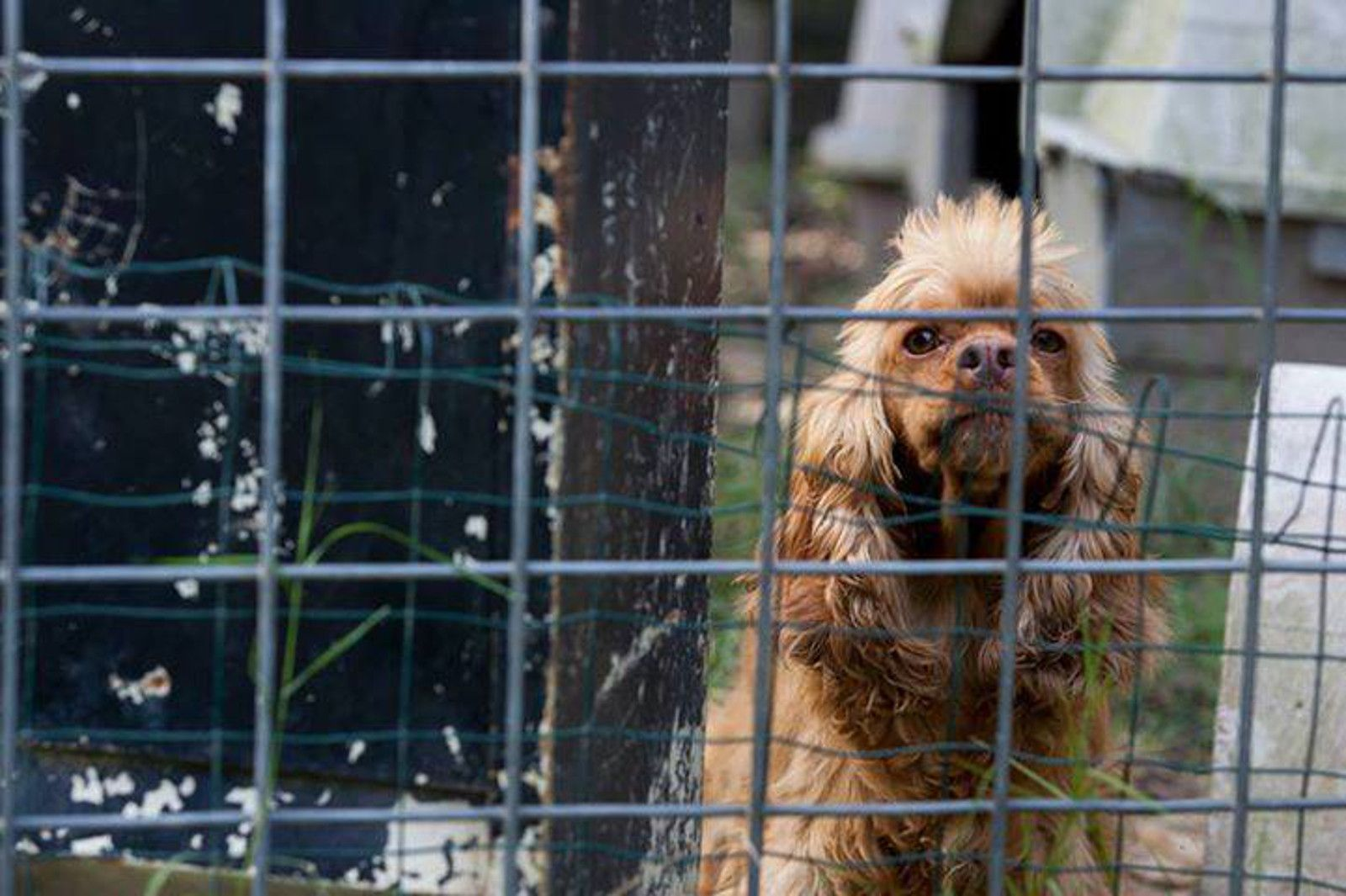 Milwaukee May Soon Ban the Sale of Puppy Mill Dogs in Pet