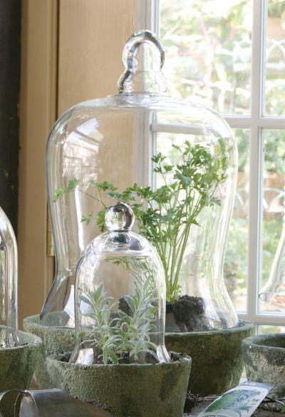plante sous cloche concept diy plante sous cloche plante sous cloche maison du monde with. Black Bedroom Furniture Sets. Home Design Ideas