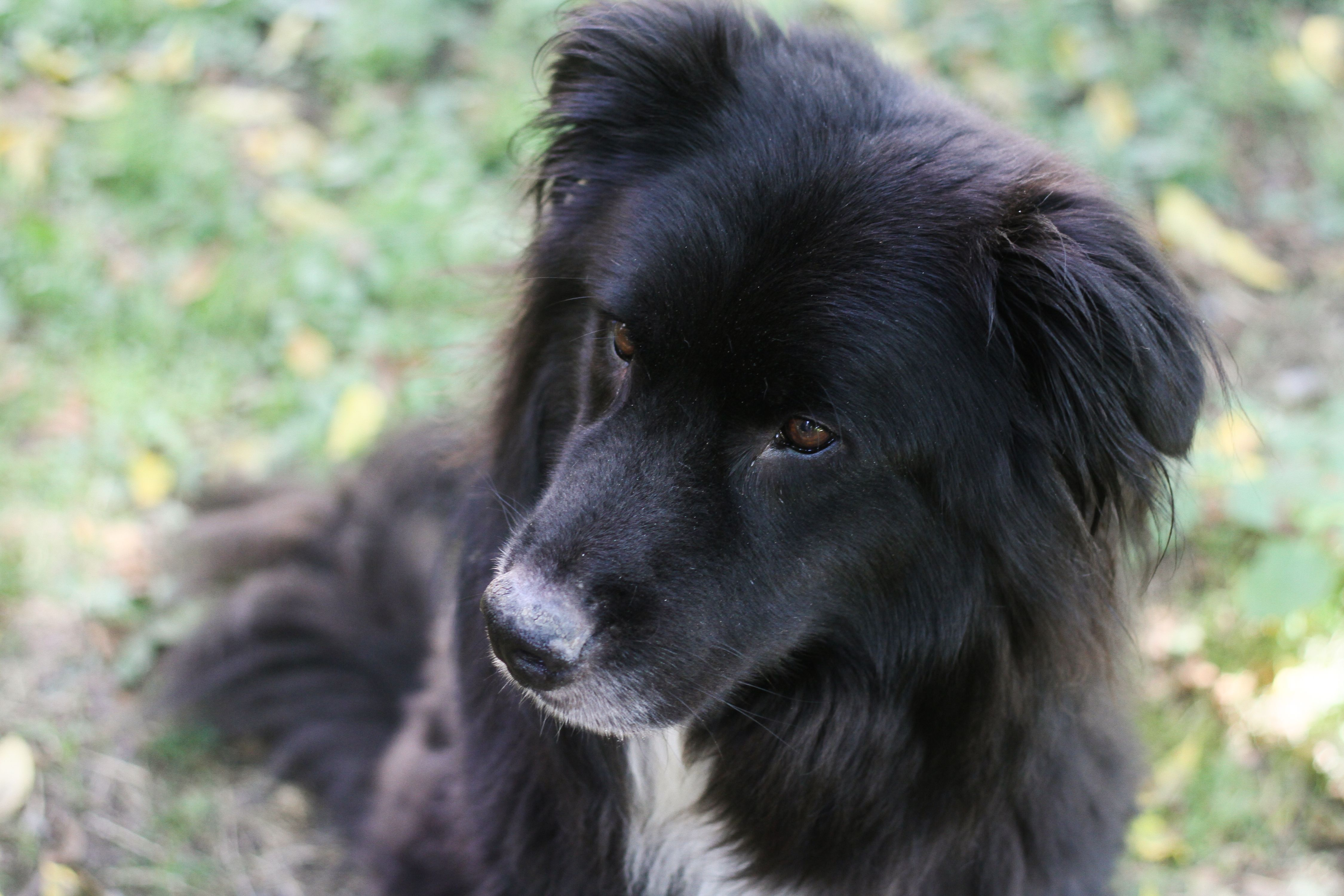is pumpkin good for dogs with kidney disease