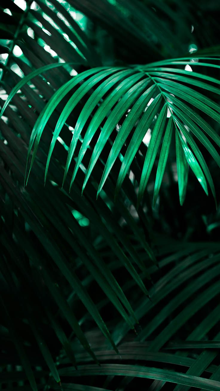 To The Jungle iPhone Xs Max Wallpapers Fotos