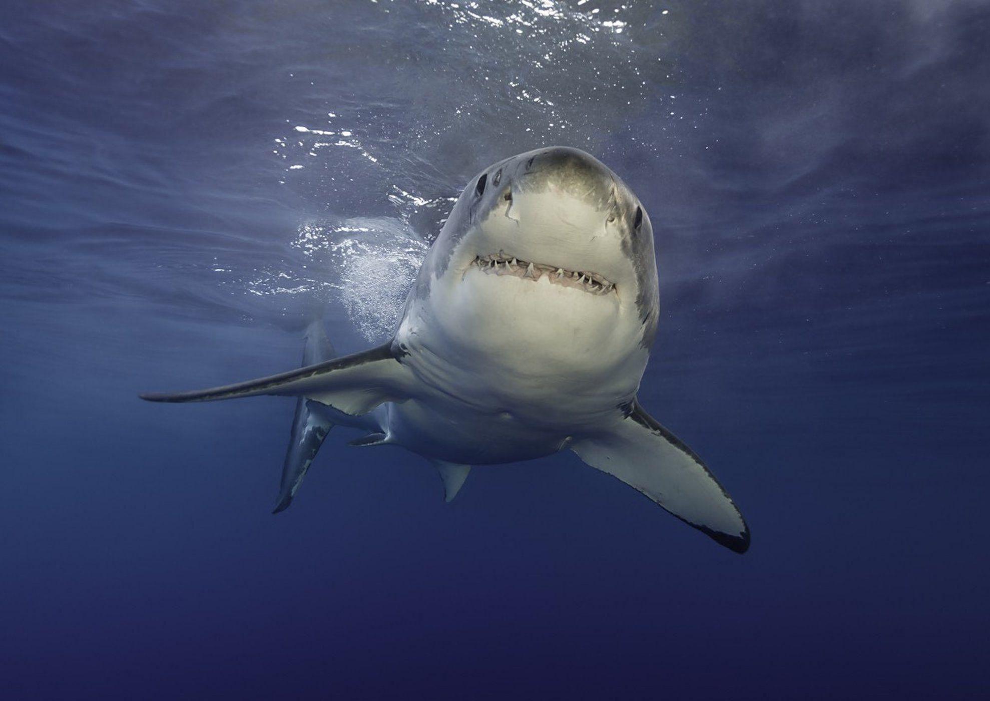 Shark Week How to Watch It Like a Scientist Shark week