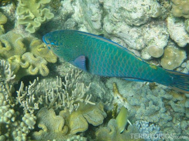 Peixes de todos os tamanhos e cores, Great Barrier Reef