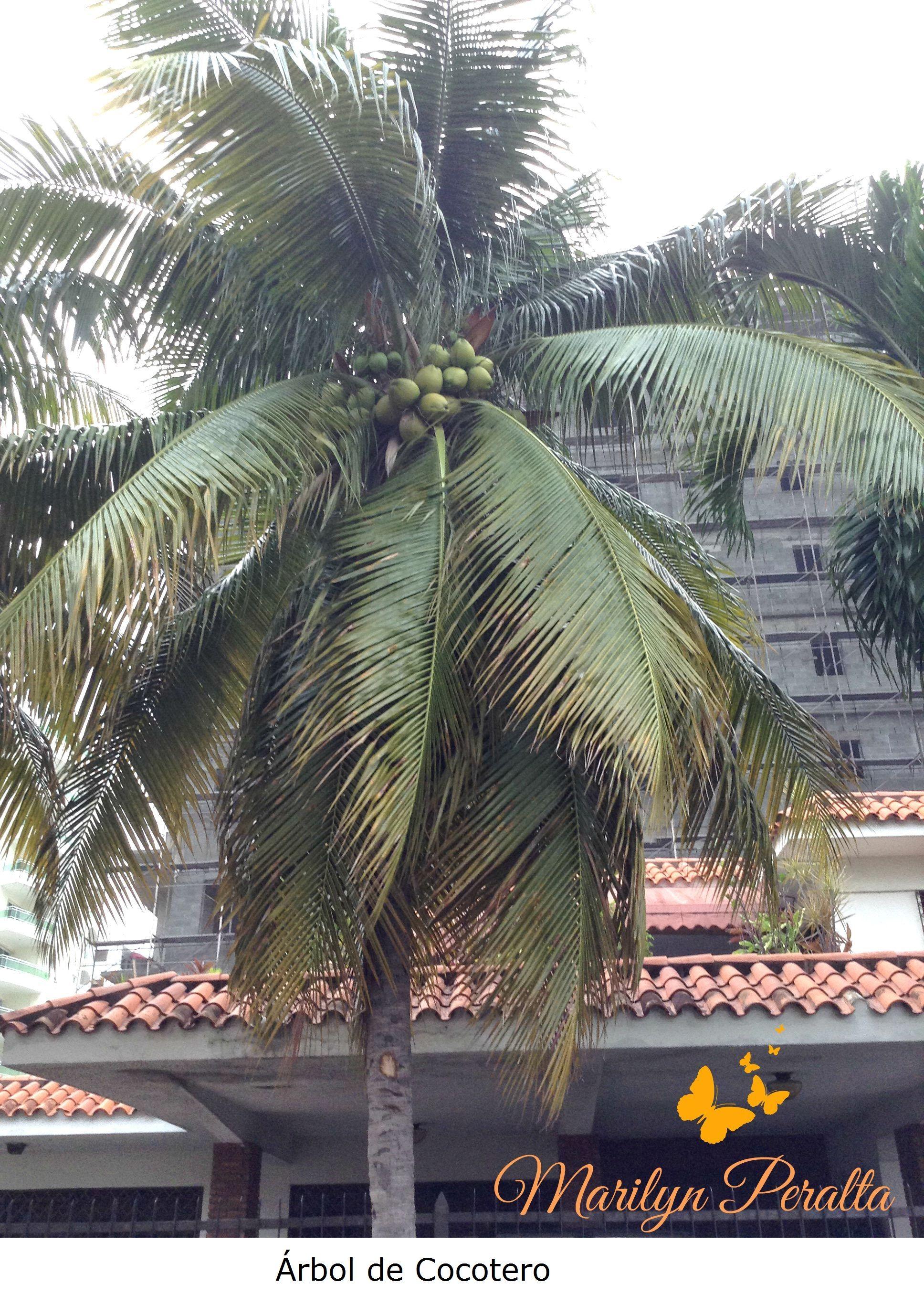 El Cocotero | Tropical, Palmas y Coco