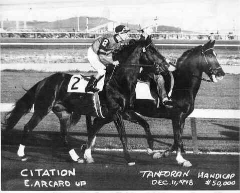 Citation Horses Thoroughbred Horse Racing Horse Racing