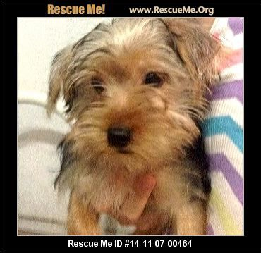 Franklin Male Maltese Mix Age Young Puppy Compatibility Good W Most Dogs Good W Most Cats Good W Kids And Adults Personality Average Ene Yorkie