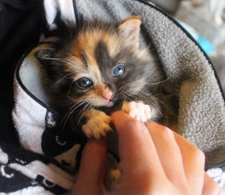 With Kitten Season Is Coming Local Rescues Hope To Prepare Community Kitten Season Cat Day Kittens