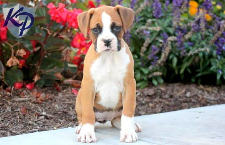 Puppy Finder Find & Buy a Dog today by using our