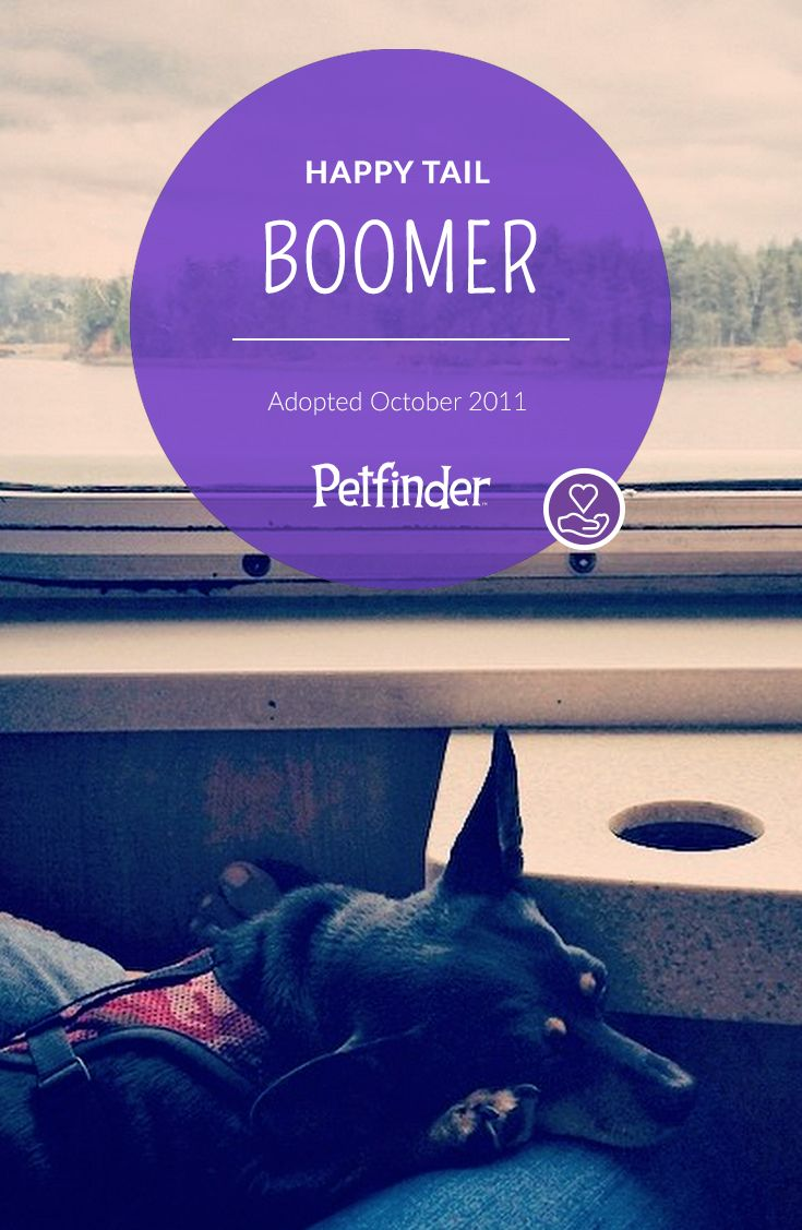 """Petfinder Happy Tail Story """"I can't even remember my life"""