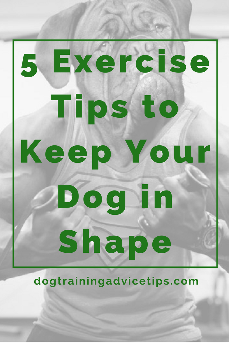5 Tips for Exercising Your Dog | Exercise is a necessity for your dog and something that you should do on a regular basis. This is because it keeps your dog physically fit and helps her deal with anxiety and stress. A fully pampered dog who does nothing but sit around in a comfy bed the whole day will be more prone to anxiousness, become harder to control when over excited, and can reach a point where it is unhealthily overweight. So check out our 5 Tips for Exercising Your Dog.