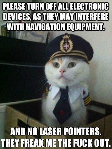 Who the eff has a pilot costume for their cat... I think thatu0027s & Who the eff has a pilot costume for their cat... I think thatu0027s the ...