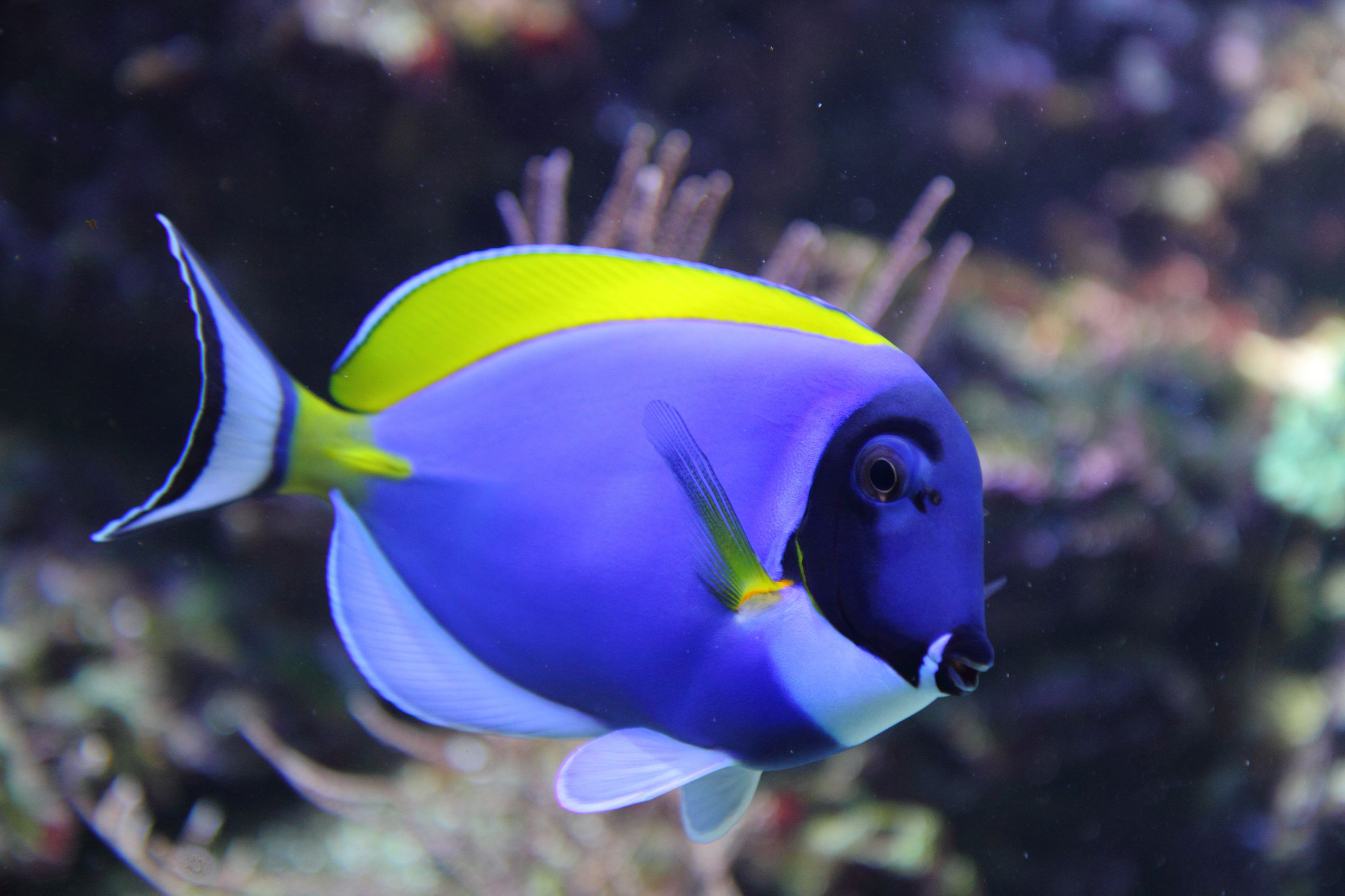 Generally caring for saltwater fish is more challenging for Exotic fish tanks