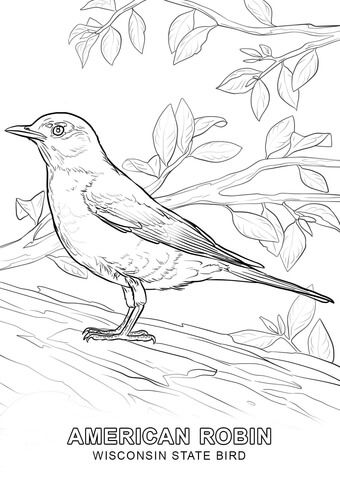 Wisconsin State Bird Coloring Page From Wisconsin Category Select