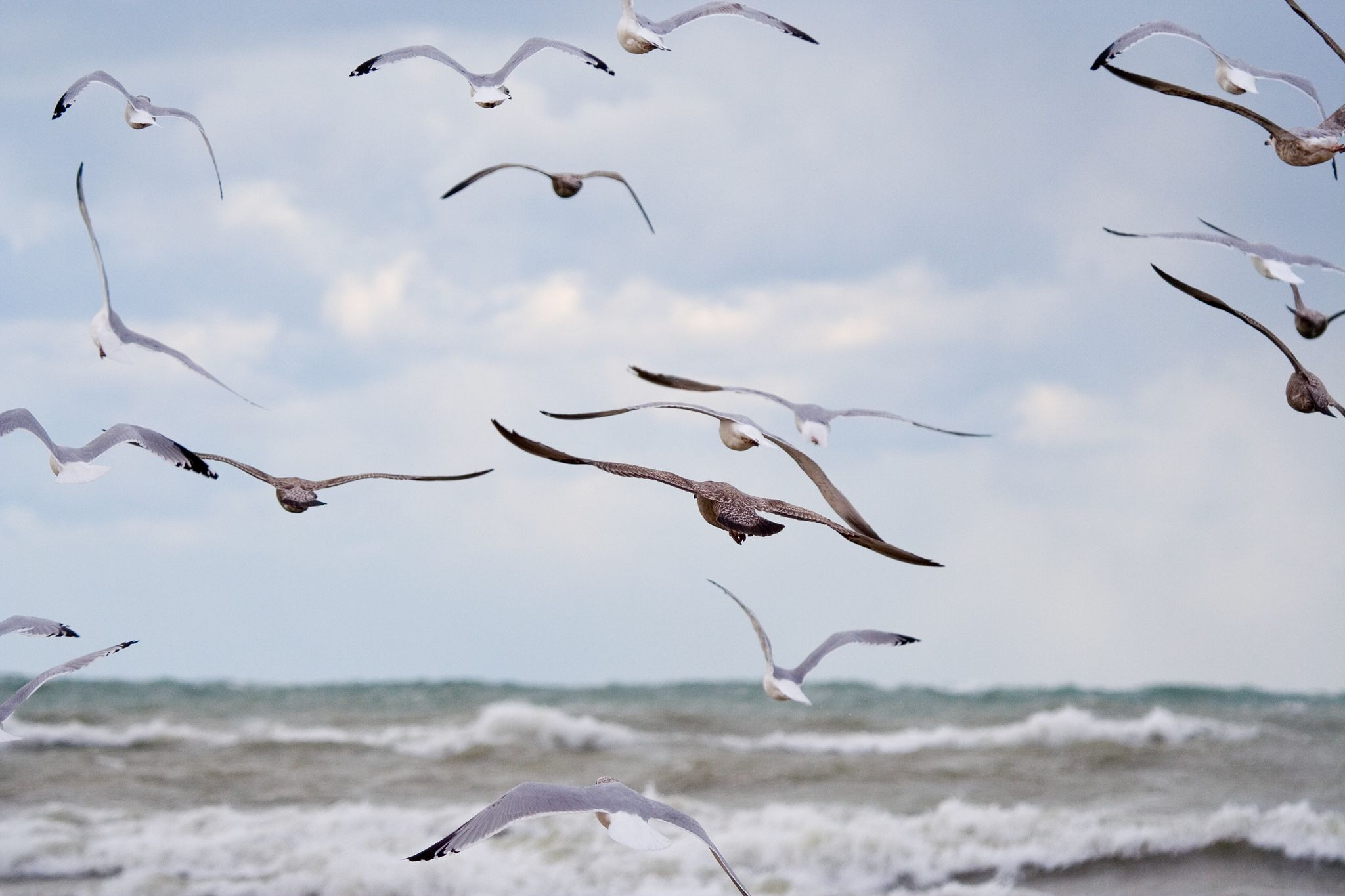 Gulls be gone 10 ways to get rid of pesky birds seagull