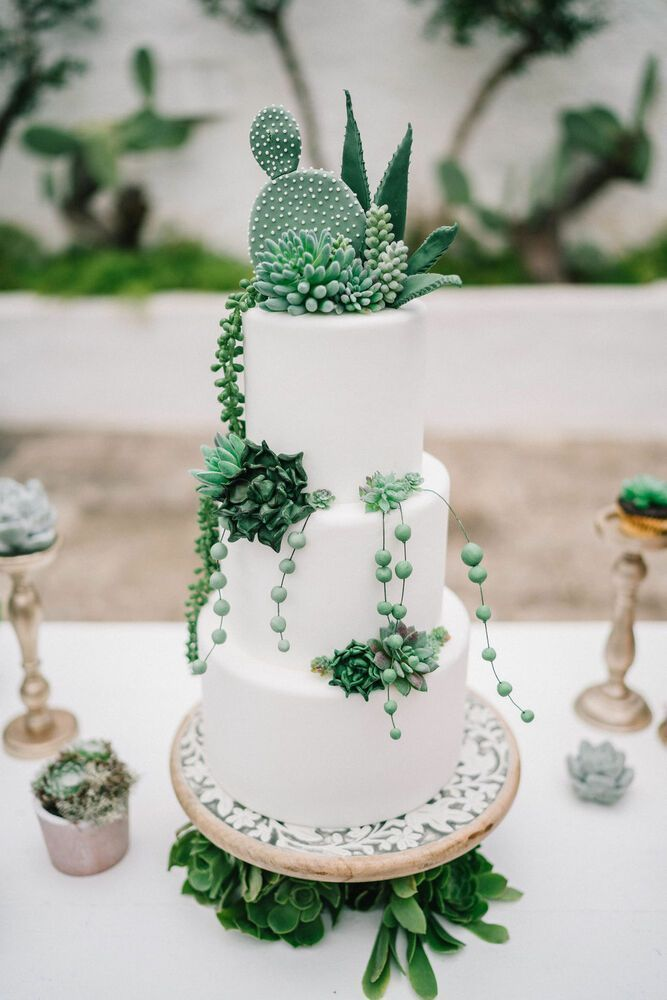Succulent Wedding Cake and Plant Decor for a Timel