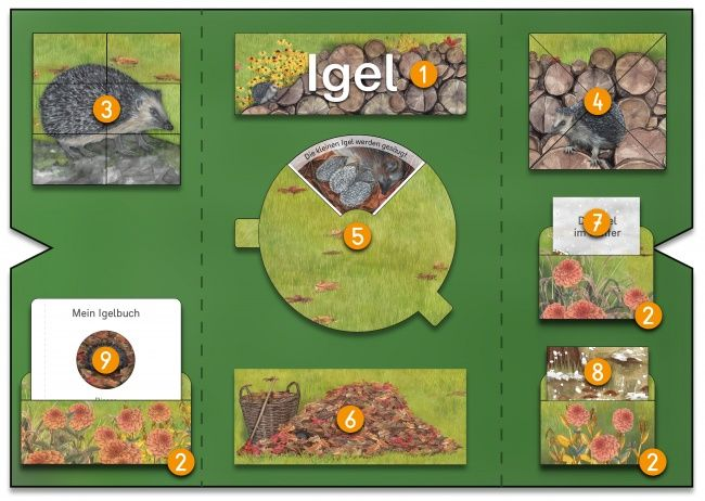 mini lapbook igel projektplan primaire education classroom und kindergarten. Black Bedroom Furniture Sets. Home Design Ideas