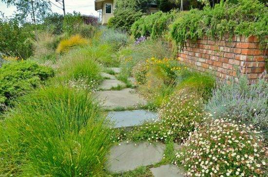 Meadows make better sense than lawns for dry California, says Andrea ...