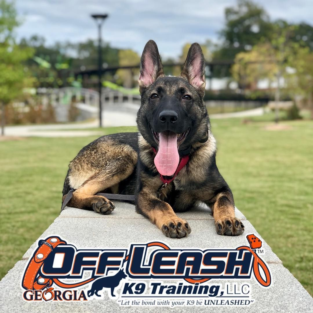 Peachtree Dog Trainers Dog Training Dog Training School Police