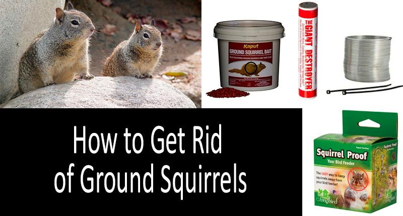 How to get rid of ground squirrels top 5 best squirrel