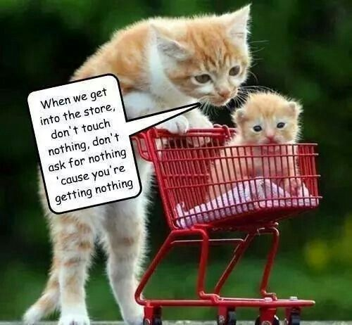 Mama cat tells kitten he inst getting anything in store. Haha | Cute baby  cats, Funny cat memes, Cute animal quotes