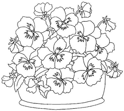 pansies coloring page google search