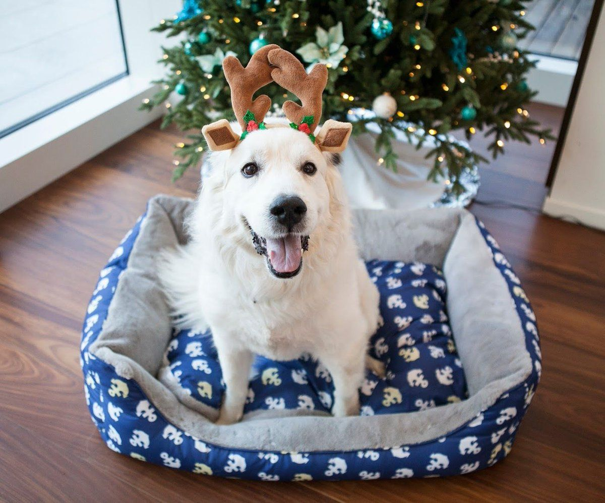 Christmasready! My super excited doggo Music