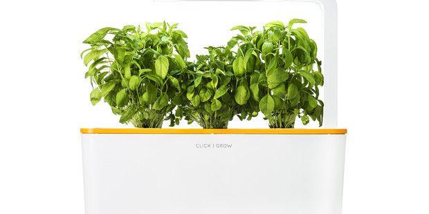 Click Grow Smart Herb Gardens Touch Of Modern Herb 640 x 480