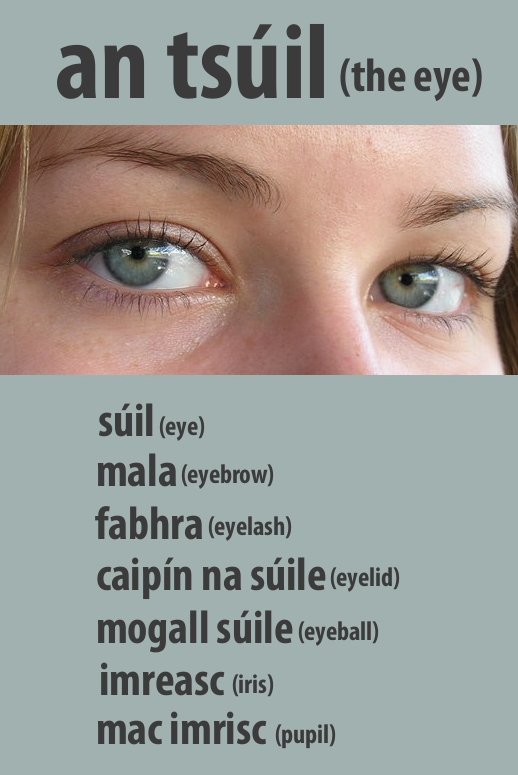 #irishfortheeyes. Learn Gaeilge, The Irish Language. Eye