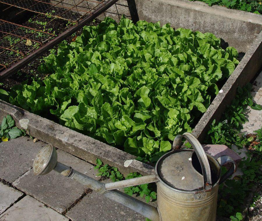 5 Vertical Vegetable Garden Ideas For Beginners: Growing A Home Vegetable Garden: A Comprehensive Guide