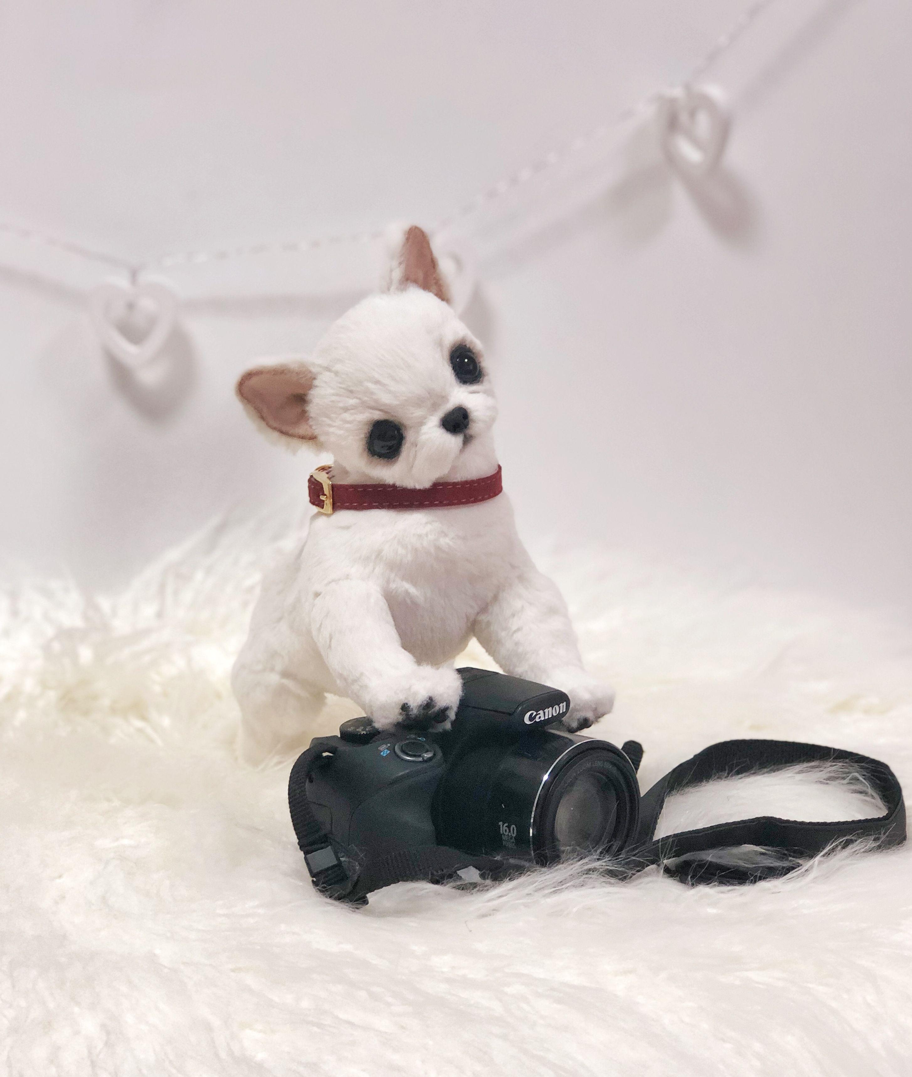 Chihuahua Chihuahua Puppy Ooak Chihuahua Dog Realistic Etsy Chihuahua Puppies Realistic Stuffed Animals Chihuahua Dogs [ 3434 x 2908 Pixel ]